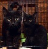 Черные котята в клетке стоковые изображения