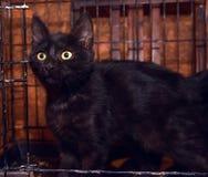 Черные котята в клетке стоковые фотографии rf