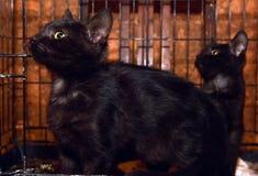 Черные котята в клетке стоковое изображение rf