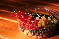 Черные красные и белые смородины в пластичном шаре Стоковое Изображение RF
