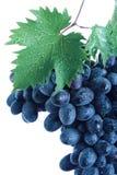 черные листья виноградины группы Стоковые Фото