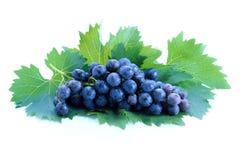 черные листья виноградины группы Стоковые Изображения RF