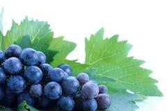 черные листья виноградины группы Стоковые Фотографии RF