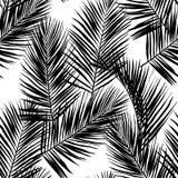 Черные листья ладони вектора изолированные на белой предпосылке иллюстрация вектора