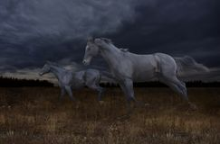 Черные лошади скакать через степь на ноче стоковое изображение