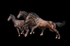 черные лошади 3 Стоковые Фото