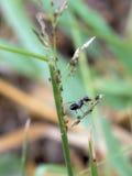 Черные муравеи стоковое изображение