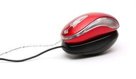 черные мыши над красной белизной Стоковое Изображение