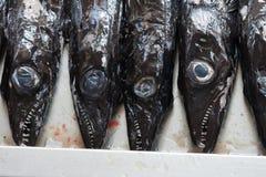 черные ножны рыб Стоковые Изображения RF