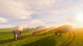 черные овцы Стоковое Фото