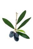 черные оливки Стоковое Фото