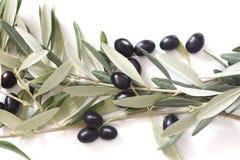 Черные оливки с листьями на белой предпосылке Стоковое фото RF