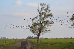 Черные птицы Стоковые Изображения