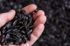 Черные семена подсолнуха в руке стоковое изображение rf