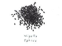 Черные семена тимона (Nigella Sativa) над белизной стоковые фотографии rf