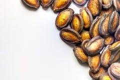 черные семена дыни Стоковая Фотография RF