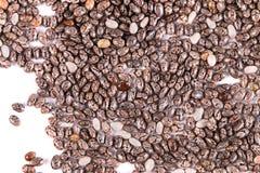 Черные семена chia изолированные на белизне Стоковое Изображение RF