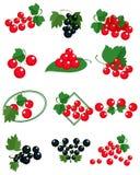 черные смородины красные Стоковые Изображения
