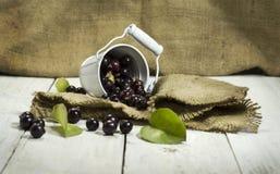 Черные смородины в ведре на белой деревянной предпосылке Стоковая Фотография