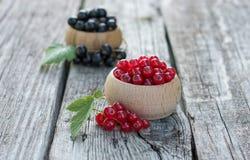 черные смородины красные Стоковая Фотография RF