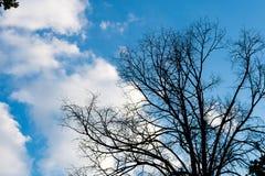 Черные сухие ветви дерева без листьев Стоковое Изображение
