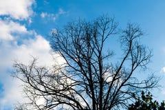 Черные сухие ветви дерева без листьев Стоковое фото RF