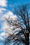 Черные сухие ветви дерева без листьев Стоковое Изображение RF