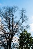 Черные сухие ветви дерева без листьев Стоковые Фото