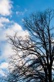 Черные сухие ветви дерева без листьев Стоковые Изображения RF