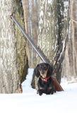 Черные такса и корокоствольное оружие около дерева березы в лесе зимы Стоковая Фотография