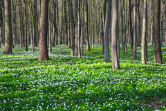 Черные тени лежали на зеленой траве и белых цветках на лужайке с Стоковые Изображения RF