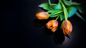 черные тюльпаны Стоковое Изображение