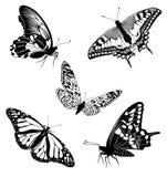 черные установленные бабочки татуируют белизну Стоковое Фото