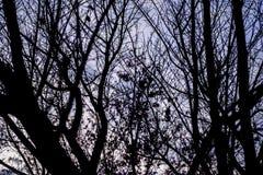 Черные хворостины с фиолетовым небом Стоковые Изображения