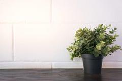 Черный бак зеленого завода дерева на деревянном столе с белым кирпичом Стоковая Фотография RF