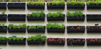черный бак зеленого завода Стоковое Фото