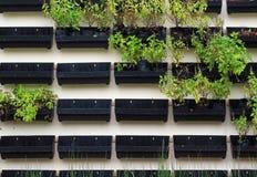 черный бак зеленого завода Стоковое Изображение RF
