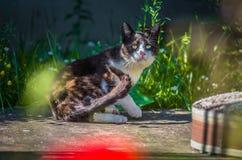 Черный белый кот играя в дворе Стоковая Фотография