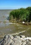 черный берег моря Стоковое Изображение