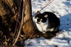 Черный & белый кот Стоковые Фотографии RF