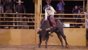 Черный бык и съемка всадника акции видеоматериалы