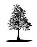 черный вал Стоковая Фотография RF