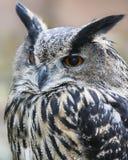 черный вектор сыча чернил иллюстрации орла чертежа Стоковое Фото