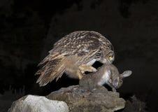 черный вектор сыча чернил иллюстрации орла чертежа Стоковое Изображение RF