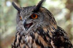 черный вектор сыча чернил иллюстрации орла чертежа Стоковые Фотографии RF