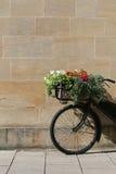 Черный велосипед с корзиной цветков полагаясь против камня wal Стоковые Изображения RF
