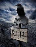 Черный ворон на человеческом черепе Стоковое Фото