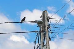 Черный ворон сидит на электрических проводах около конкретного штендера Переход электричества и экологичность окружающей среды стоковые фотографии rf
