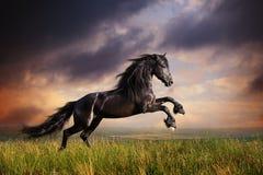 Черный галоп лошади Friesian Стоковые Изображения