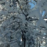 черный голубой пейзаж фото footway тонизировал белые древесины зимы Стоковые Изображения